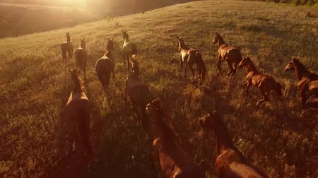 mamífero : Horses are galloping. Aerial view of moving horses. We are the wild force. Home is where freedom dwells.