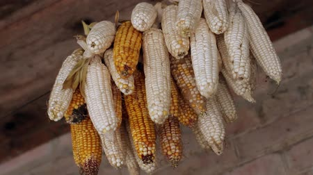 hacienda : sheaf of corn is hanged under the roof of house
