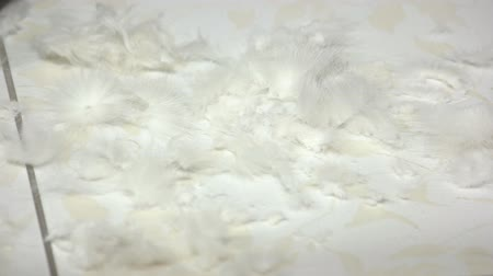 проливая : Cat hair clippings close up. Fur falling on the floor. Стоковые видеозаписи