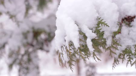 szron : Snow-covered trees. Snow on the branches. Snowy winter. Good New Year spirit. Wideo