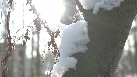 zmrazit : Tree bark and snow macro. Winter, bright sunlight. Dostupné videozáznamy