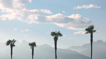 субтропический : Palm trees and sky, mountains. Beautiful view of nature.