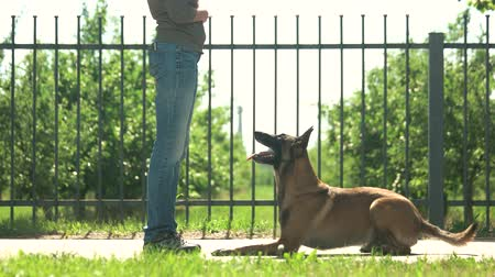 fidelity : Master and obedient dog. Smart dog is joyfully executing commands. Stock Footage