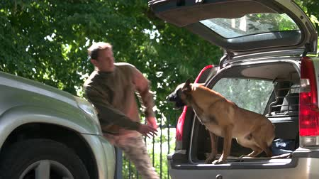 fidelity : Dog in a car trunk is barking on a stranger. Dog is training to protect a property. Stock Footage