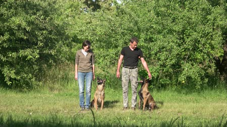 fajtatiszta kutya : Two dogs are executing commands of their owners. Two dogs are standing, sitting and lying down by the commands of their owners.
