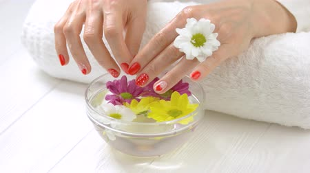 chrysanthemum : Wet manicured hands in glass bowl. Woman holding hands in glass bowl with water and colored chrysanthemums. Skin care and treatment.