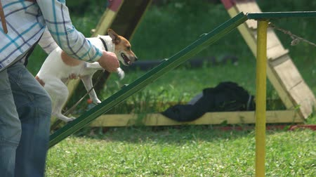 se movendo para cima : 27.05.2017 - Kyiv,Ukraine. The owner is encourage his dog by giving food. Little dog is successfuly walking through the dog walk equipment. Stock Footage