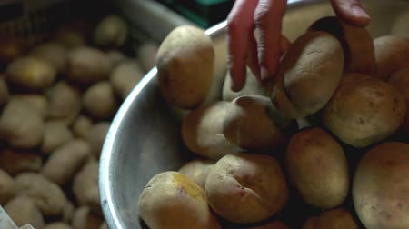amido : Taking and putting potatoes. Hands taking grabbing potatoes from a pile and putting them into metal bowl, close up, slow-mo. Stock Footage