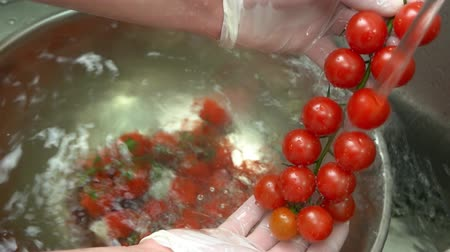 tomate cereja : Cherry tomatoes close up. Hands washing red vegetable.
