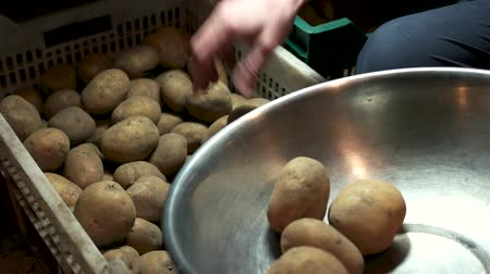 starch : Male hand and raw potatoes. Vegetable in a crate.