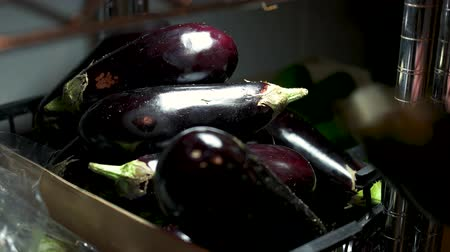 kratten : Pile of ripe eggplants. Male hand and vegetable. Agriculture business ideas.