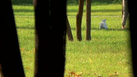 parkland : White dog playing with owner. Grass lawn and trees.
