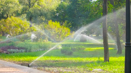 borrifar : Water sprinkle system in the park lawn. Automatic irrigation system for pouring grass. Stock Footage