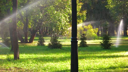 színárnyalat : Automated irrigation system in park. Lawn sprinkler spaying water over green grass. Stock mozgókép