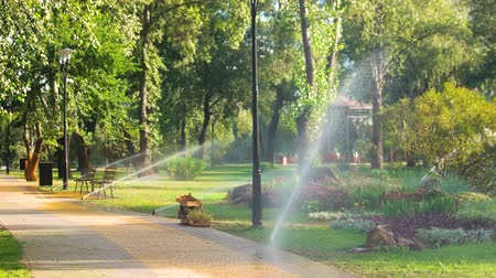 окропляет : Irrigation system in city park. Lawn sprinkler spaying water over green grass and flowers.