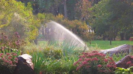 floweret : Flower garden in the park. Water sprinkler in a garden pouring flowers. Stock Footage