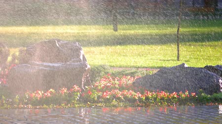 小花 : Water splashing in the garden park. Water sprinkler, pavement, flowers, grass and rocks.
