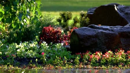 floweret : Green plants and rocks. Beautiful garden with wet greens. Stock Footage
