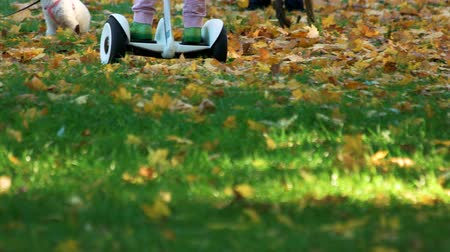 gyroscope : Child driving gyroscooter on the grass. CLose up legs. Grass covered with fallen oak leaves.