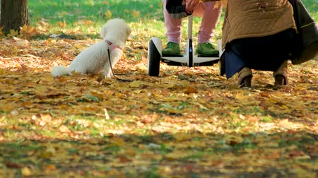 gyro : People with gyroscooter and white dog in the park. Autumn park covered with yellow oak leaves. Stock Footage