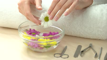 chrysanthemum : Young woman hands receiving spa therapy. Gentle female hands holding white chrysanthemum from aroma bath. Spa treatment for hands. Feminine delicacy and purity. Stock Footage