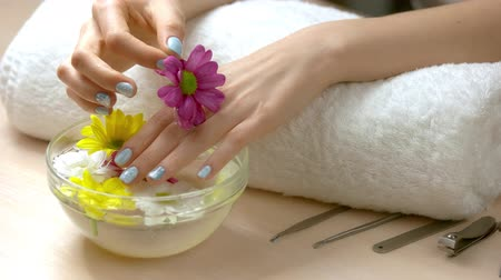 chryzantema : Spa treatment for female hands. Woman manicured hands with gentle chrysanthemums from aroma bath. Spa and aroma therapy for hands.