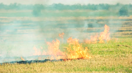anız : Field grass fire and smoke motion. Fire on green forest background, wildfire concept.