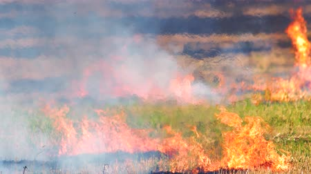 inflammable : Intense outdoor wildfire in the field. Enviromental crime. Flame, heat and smoke motion outdoor. Stock Footage