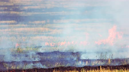 inflammable : Field of dry and fresh grass burning out. Wild fire outdoor caused by summer heat.