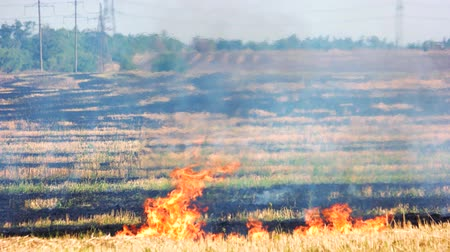 inflammable : Meadow fire, huge field. Burnt grass in the field and fire flame with black smoke.