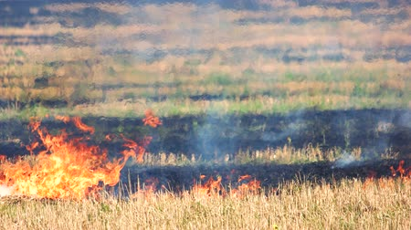 épuisement professionnel : On the field burning dry grass footage. Burning of straw on the field. Vidéos Libres De Droits