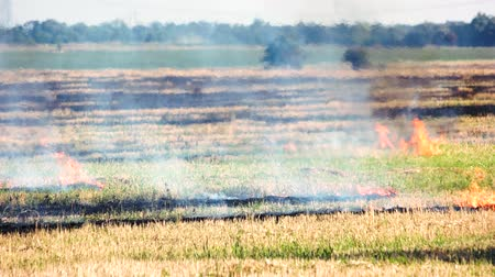 inflammable : Slowly burning grass field. Fire, heat and smoke outdoor in the summer.