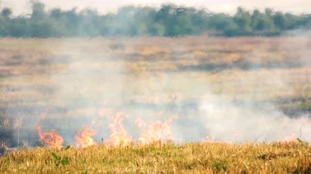 imprudence : Dry grass on fire. Accidental fire on the field in the summer. Stock Footage