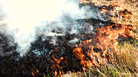 inflammable : Smoldering ashes from the wildfire. Burning dry grass close up.