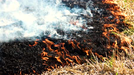 inflammable : Fire smoldering and spreading. Close up. Black burnt grass. Stock Footage