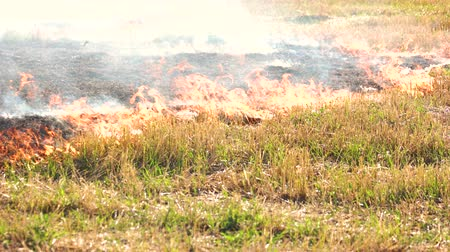 inflammable : Spreading wildfire on grass. Close up. Destructive fire in dry agriculture field in drought.