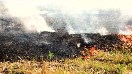 inflammable : Black burnt smoldering field. Spreading fire on dry grass outdoor.