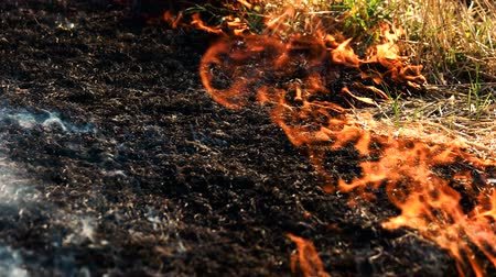 inflammable : Ash of burnt grass in the fire. Fire flame motion close up. Stock Footage