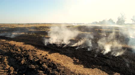 anız : Smoldering field with smoke. Grass is burning on the field near the road.