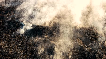 enxofre : Black smoldering dry grass with smoke in wood. Burning fields wildfire close up. Danger of forest burn in the heat. Stock Footage