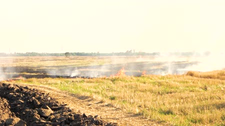imprudence : Smoldering smoke on the field of dry grass. White sky background.