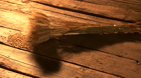 dry stalks : Bundle of wheat ears on wooden boards. Sheaf of dried golden wheat over rustic wooden boards. Wheat harvest concept. Stock Footage