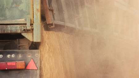 hybrids : Falling grain from th truck, close up. Grain dust motion.