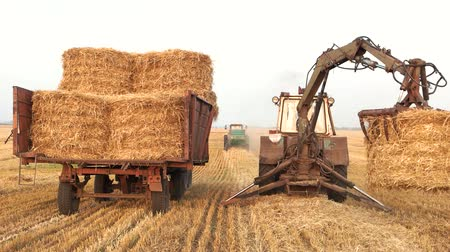 preslenmiş : Tractor with fork grabber folding hay blocks. Transportation of pressed yellow hay blocks in a trailer, back view. Stok Video