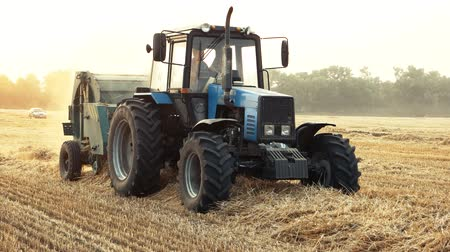 hay fields : Working blue tractor in the field. Harvesting straw in bales from the field after harvest.