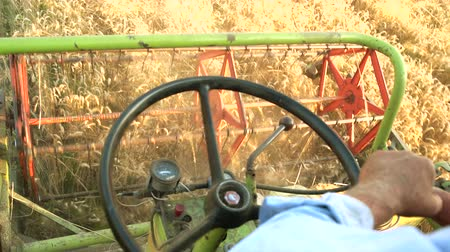 saman : Man harvesting crop driving combine. Close up, hands and rudder. Stok Video