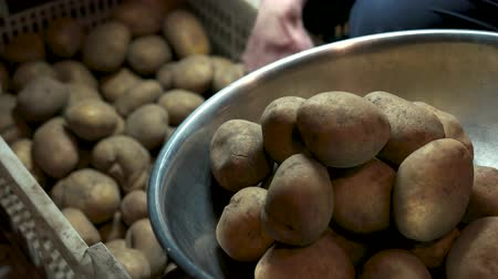 углеводы : Raw potatoes close up. Vegetable in a basin.