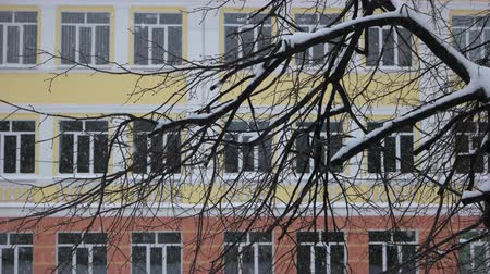 Falling snow in the city. Tree branches covered with snow. Apartment building during the snow fall. Abstract winter background.