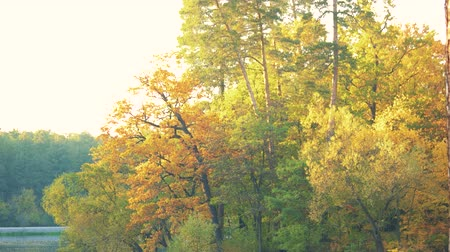 Beautiful autumn forest near lake. Scenic autumn landscape. Panoramic view on yellow forest. Magic autumn atmosphere.