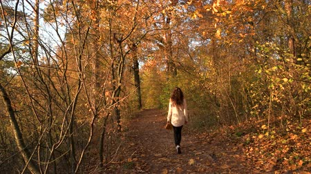 Woman walking in park, back view. Rear view girl resting in autumn forest. Enjoying autumn scenery.